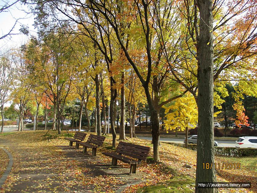 단풍보고 낙엽밟고 도서관 다녀오는 길