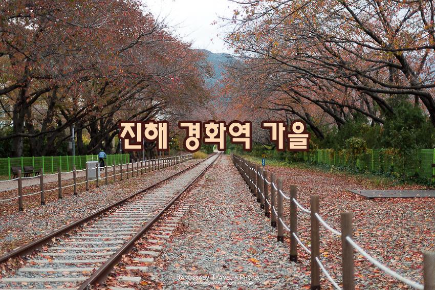 진해 경화역 벚꽃이 가득하던 철길 위에 찾아온 가을