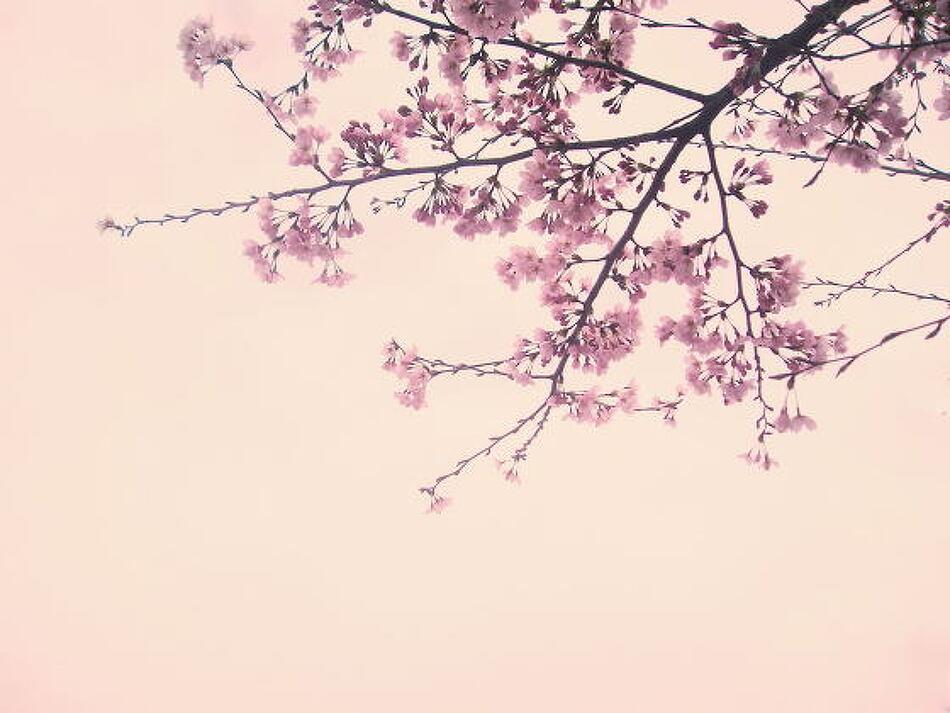 봄날, 벚꽃 그리고 너