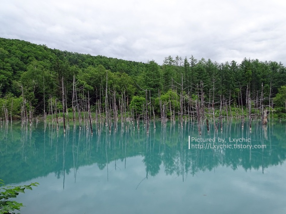 홋카이도 #18 청의호수, 흰수염폭포, 패치워크의 길